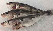 click here to view Fortune Fish Seafood Haddock Products