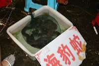 Huangsha Live Seafood Market <p> 	Live snakes being sold at the market</p>