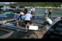 Zhapo Bay - Yangjiang Cage Culture Association <p> 	The farmers harvested some pomfret for us to take for dinner.</p>