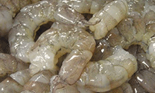 click here to view Fortune Fish & Gourmet Seafood Laughing Bird Shrimp Products