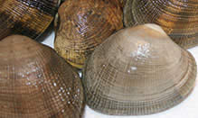 Manilla Clams