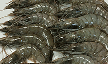 click here to view Fortune Fish & Gourmet Seafood Pine Island Shrimp - Fresh Products