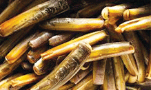 click here to view Fortune Fish & Gourmet Seafood Razor Clams Products