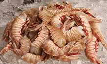 click here to view Fortune Fish & Gourmet Seafood Rock Shrimp Products
