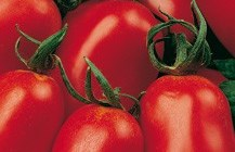 click here to read more about San Marzano