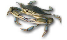 Soft Shell Blue Crabs