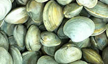 click here to read more about Clams