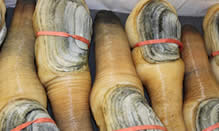 click here to read more about Geoduck