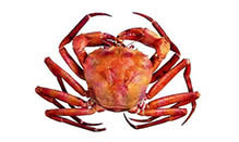 click here to read more about Red Crab