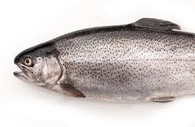 Steelhead, Riverence