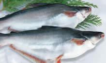 Fortune Fish & Gourmet | Finfish | Swai