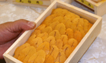 click here to read more about Sea Urchin Roe